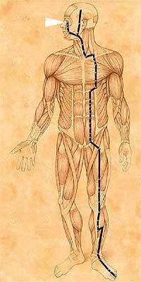 meridiano stomaco olisty.it